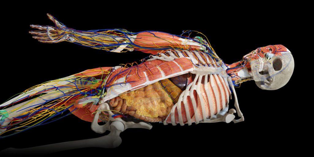 anatomy3d1
