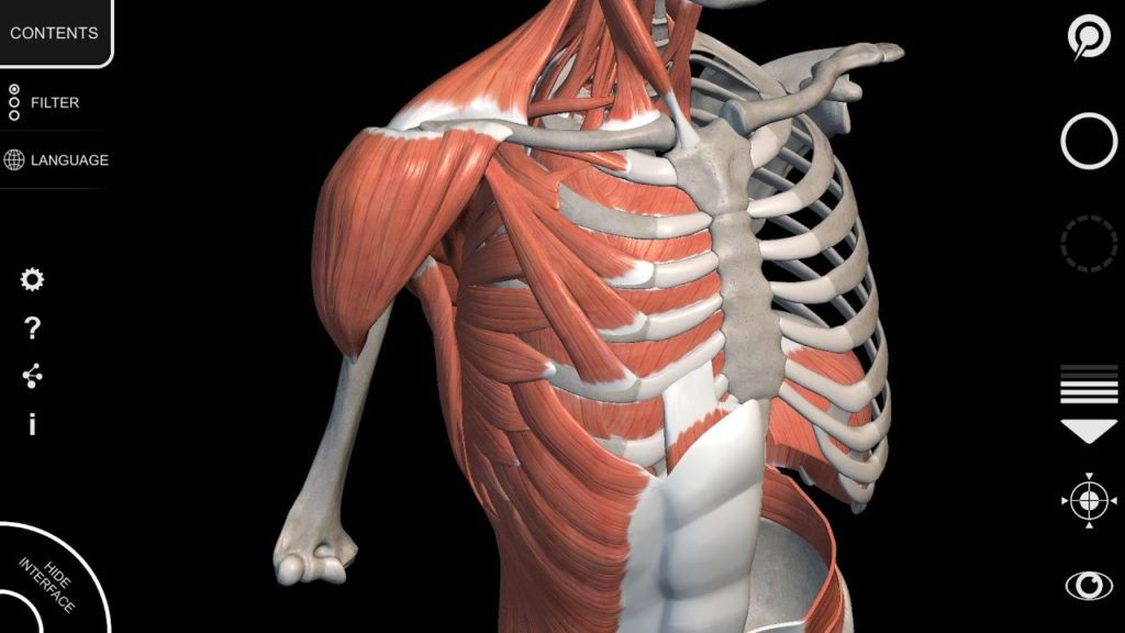 anatomy3d
